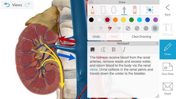 Human Anatomy Atlas 2021 screenshot-3