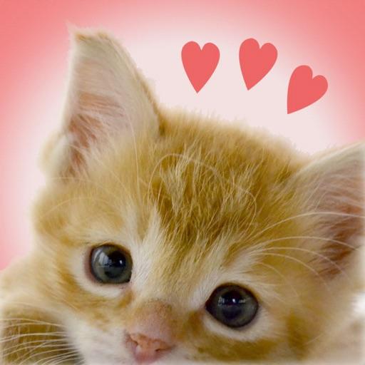My Kittens
