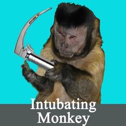 Intubating Monkey