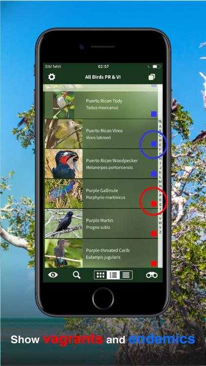 All Birds PR -> Antigua screenshot-5