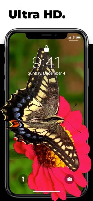 descargar fondos de pantalla para iphone 4 gratis