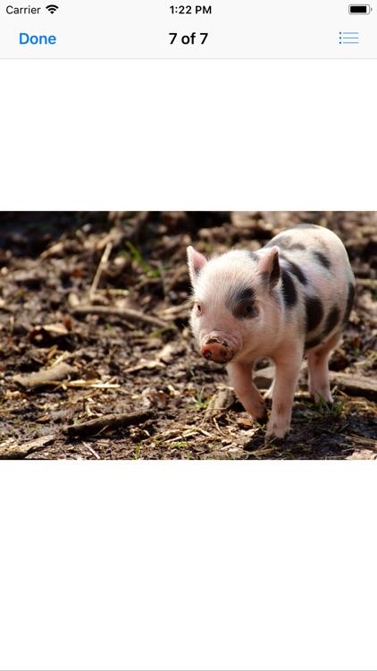 Piglet Stickers screenshot-7