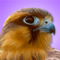 App Icon for iBird Pro Guide to Birds App in Kazakhstan App Store