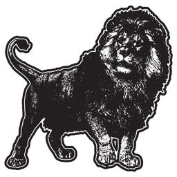 Lion FCU Mobile Banking