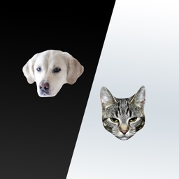 Cats and Dogs Message Stickers