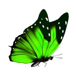 Butterflies Stickers Pro