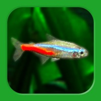 Tropical Fish Tank - Mini Aqua Hack Resources Generator online
