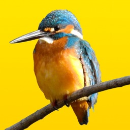 見つけた!野鳥図鑑