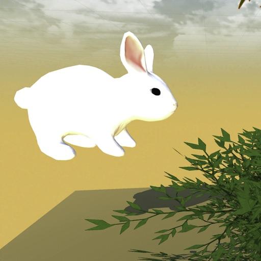 よく走るウサギ