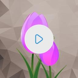 Video Color Editor
