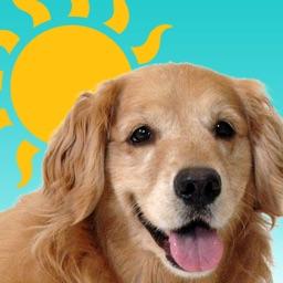 Sundoggy