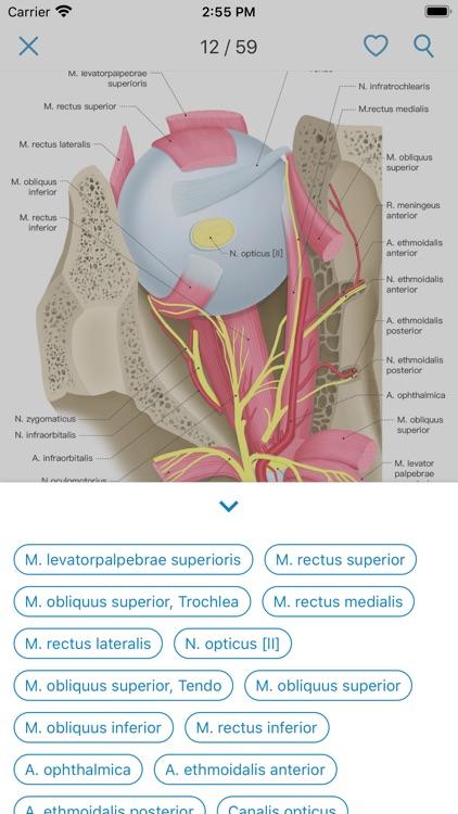 Ocular Anatomy Atlas screenshot-3