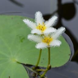 Aquarium and Pond Plant ID