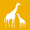 Jordan Patch - Giraffe With Calf  artwork