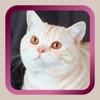 Kitty Cat Mah Jongg Solitaire