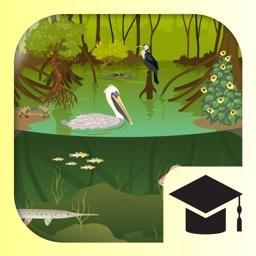 iBiome-Wetland: School Edition