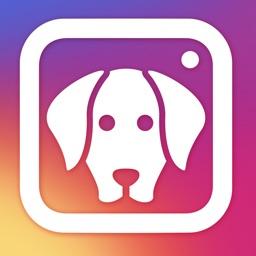 Dog Selfie Camera