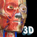 3D Anatomy Learning - Atlas на пк