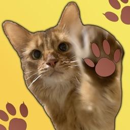 猫咪趣味表情包