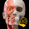 Muskeln | Skelett - Anatomie