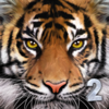 Gluten Free Games - Ultimate Tiger Simulator 2 artwork