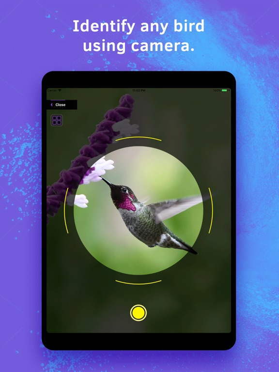 Bird Identification screenshot 6