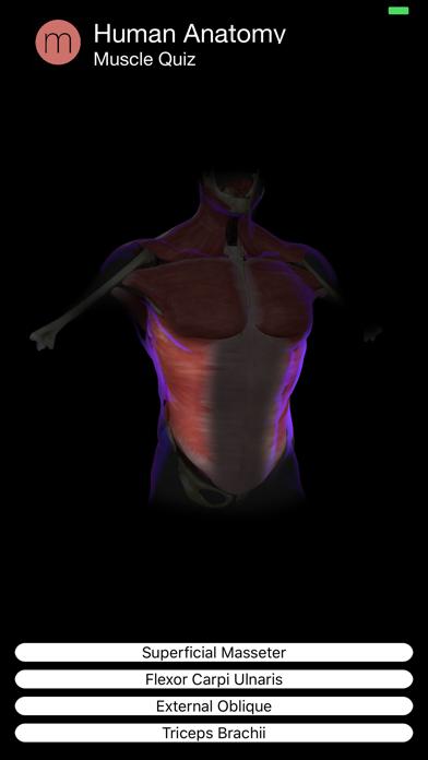 Muscle Quiz Screenshot 1