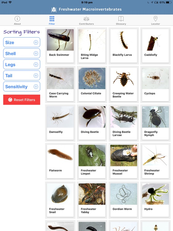 Freshwater Macro Invertebrates screenshot-6