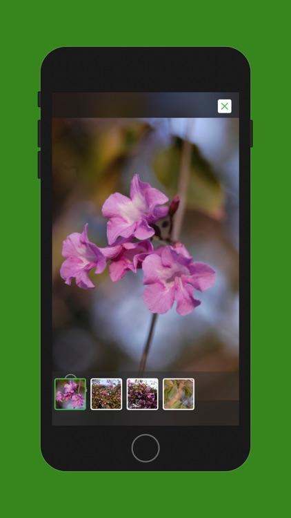 Riyadh Plants screenshot-5