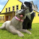 Pregnant Dog Pet Care:My Puppy
