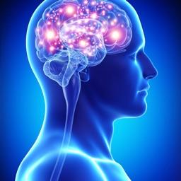 Human Nervous System Anatomy