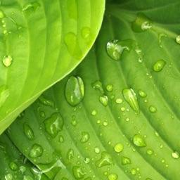 Plant Health Tracker App