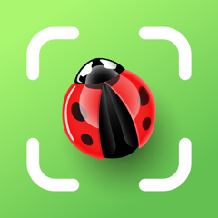 Insekten bestimmen - Insect ID
