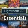 Essentials 101 Lightroom CC - Nonlinear Educating Inc.