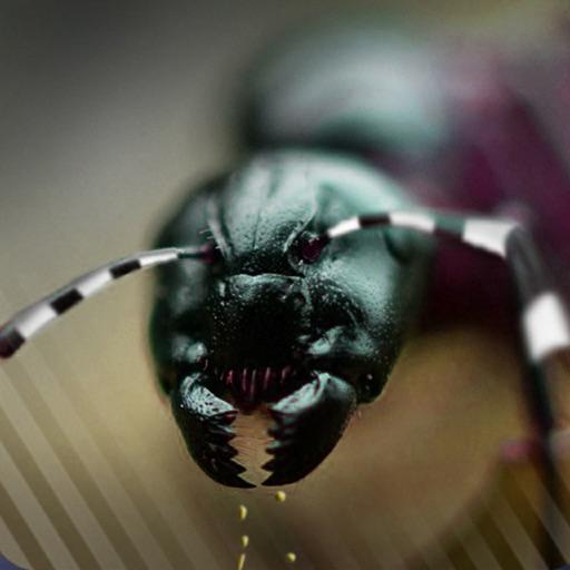 Ant Splat Madness