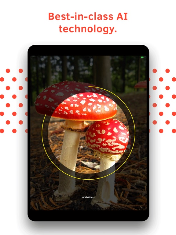 Mushroom Identification screenshot 9