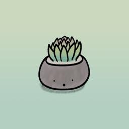 Smiley Succulents