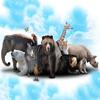Always Icecream & Clever Dragons - Zoo Animal Quiz artwork