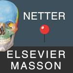 Mémofiches Anatomie Netter pour pc