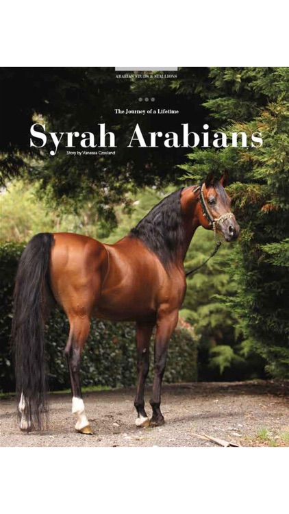 Arabian Studs and Stallions