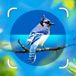 Bird Identifier - Picture Bird