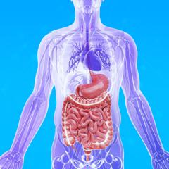 3Dbody-人体肌肉 骨骼解剖图谱教学