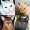 Chats : Photo-quiz sur chattes