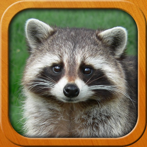 Animals for Kids, full game
