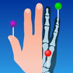 e-Anatomy pour pc
