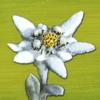 Alpenblumen Finder – Europa