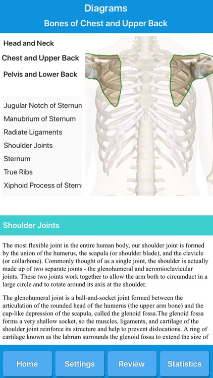 Skeletal System Anatomy screenshot-5