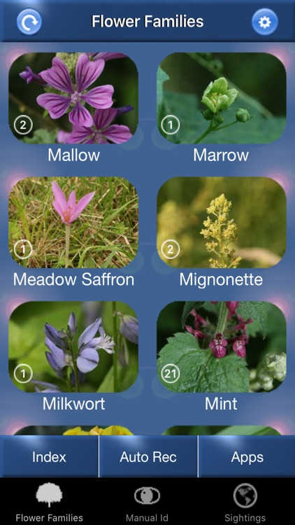 Wild Flower Id Automatic Recognition British Isles screenshot-0