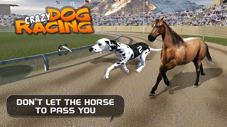 Crazy Dog Racing : Chase Racing Bunny With Pet Dog screenshot-3