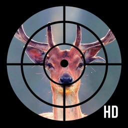 HD Wallpapers for Deer Hunting